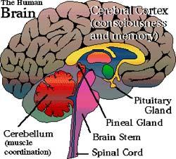 neuro healing Cervello
